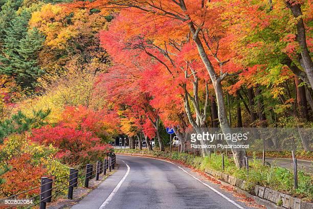 Autumn colors in Fuji Five Lakes Region, Japan