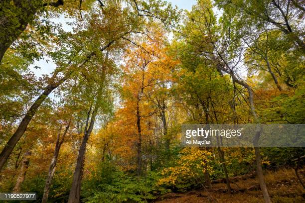 autumn colors in maryland heights - potomac maryland stock pictures, royalty-free photos & images