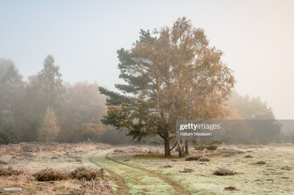 Autumn Colors In The Mist : Stock Photo