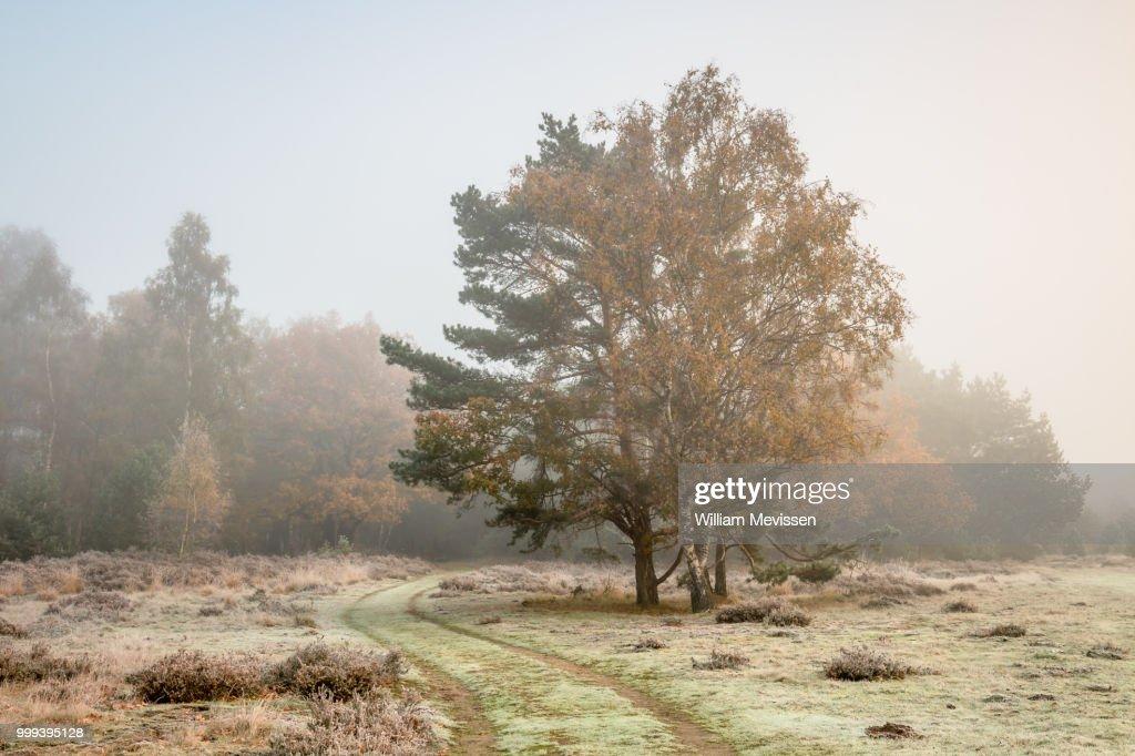 Autumn Colors In The Mist : Stockfoto