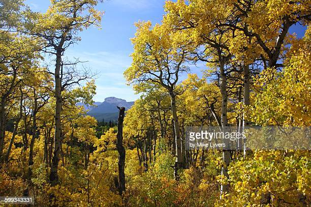 autumn colors in the montana rockies - blackfoot stock pictures, royalty-free photos & images