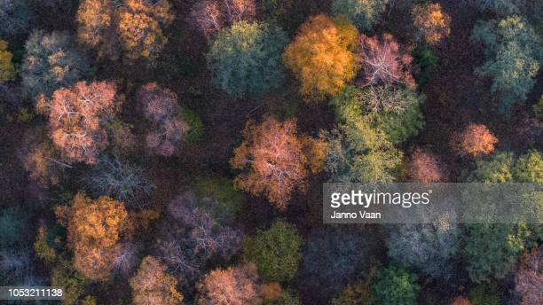 autumn colors in the woods - season stock pictures, royalty-free photos & images