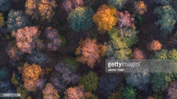 autumn colors in the woods - cambiamento foto e immagini stock