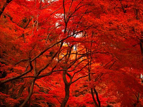Autumn Colors in Tokyo, Japan - gettyimageskorea