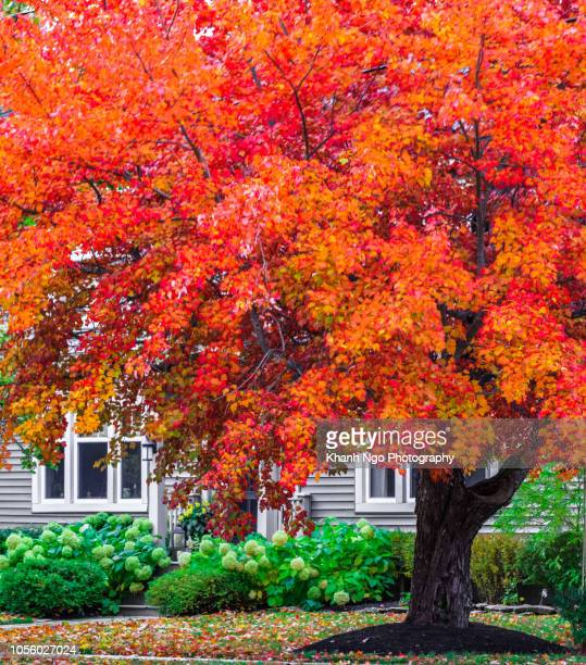 autumn colors in urban area - khanh ngo stock pictures, royalty-free photos & images