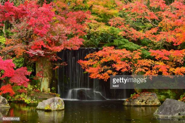 autumn colors /japan - kobe japan stock pictures, royalty-free photos & images