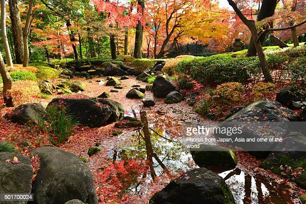 Autumn Colors of Japanese Garden in Tokyo