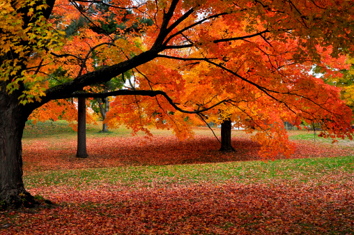 Autumn colors of New England - gettyimageskorea