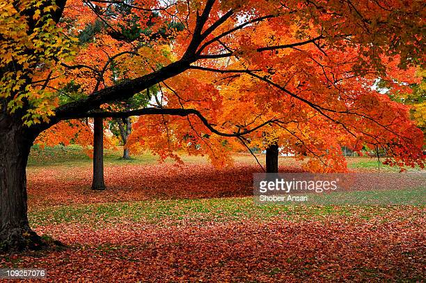 autumn colors of new england - autumn falls stock pictures, royalty-free photos & images