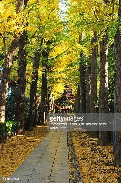 autumn colors of otaguro park, tokyo - suginami stock photos and pictures