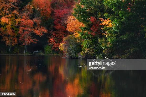 autumn colors of rhode island - providence rhode island stock photos and pictures
