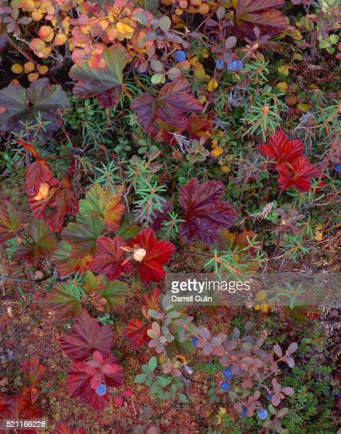 Autumn Colors on the Tundra