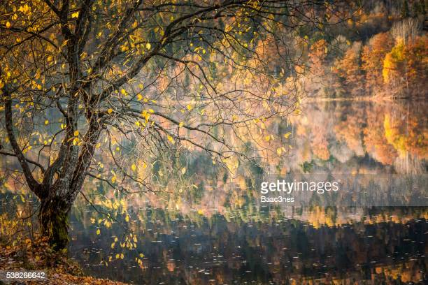 Autumn colors - Part of a tree standing near the lake