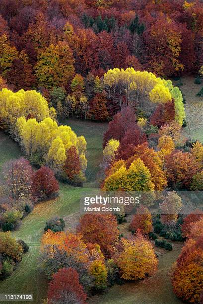 autumn colors - martial stock pictures, royalty-free photos & images
