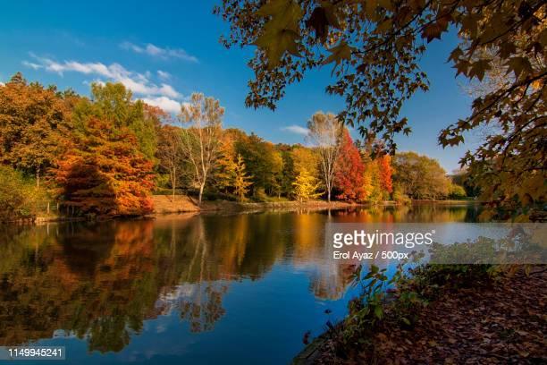 autumn colors - arboreto foto e immagini stock