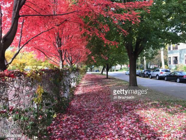 autumn colors - evanston illinois stock pictures, royalty-free photos & images