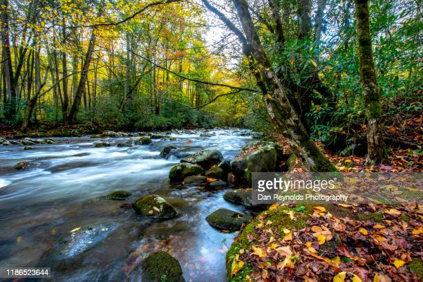 autumn colors - tennessee stock pictures, royalty-free photos & images