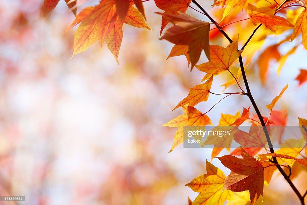 秋の色 : ストックフォト