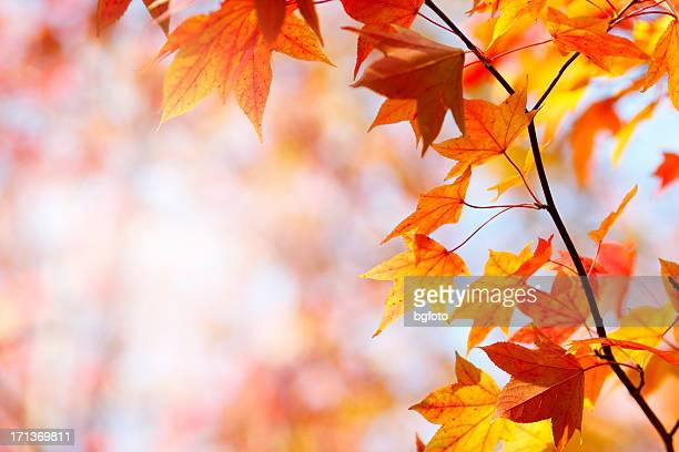 autumn colors - autumn falls stock pictures, royalty-free photos & images