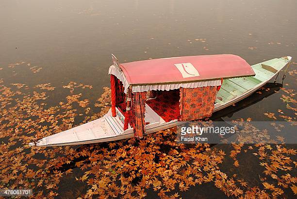 autumn colors - kashmir stock photos and pictures