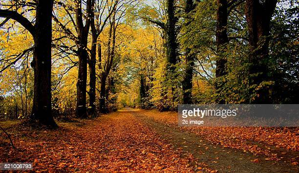 autumn colors - kildare stock photos and pictures