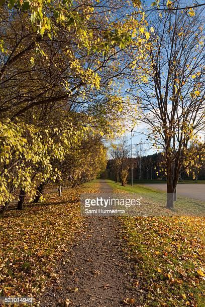 autumn colors - jyväskylä stock photos and pictures