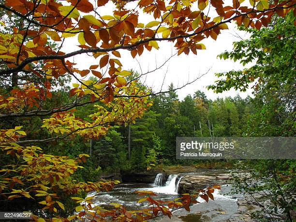 autumn colors - upper peninsula stock pictures, royalty-free photos & images