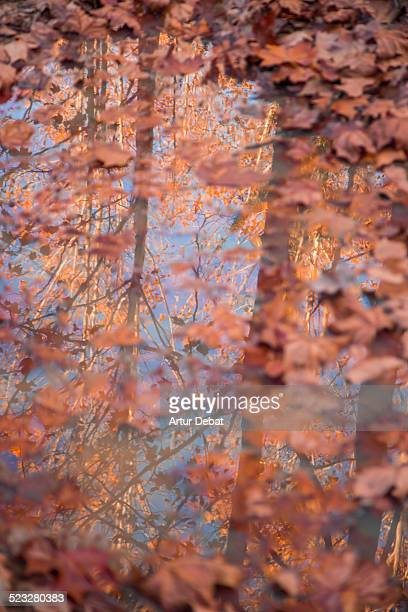 autumn colors - maresme stock photos and pictures