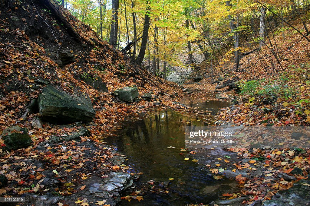 Autumn Colors : Stock Photo