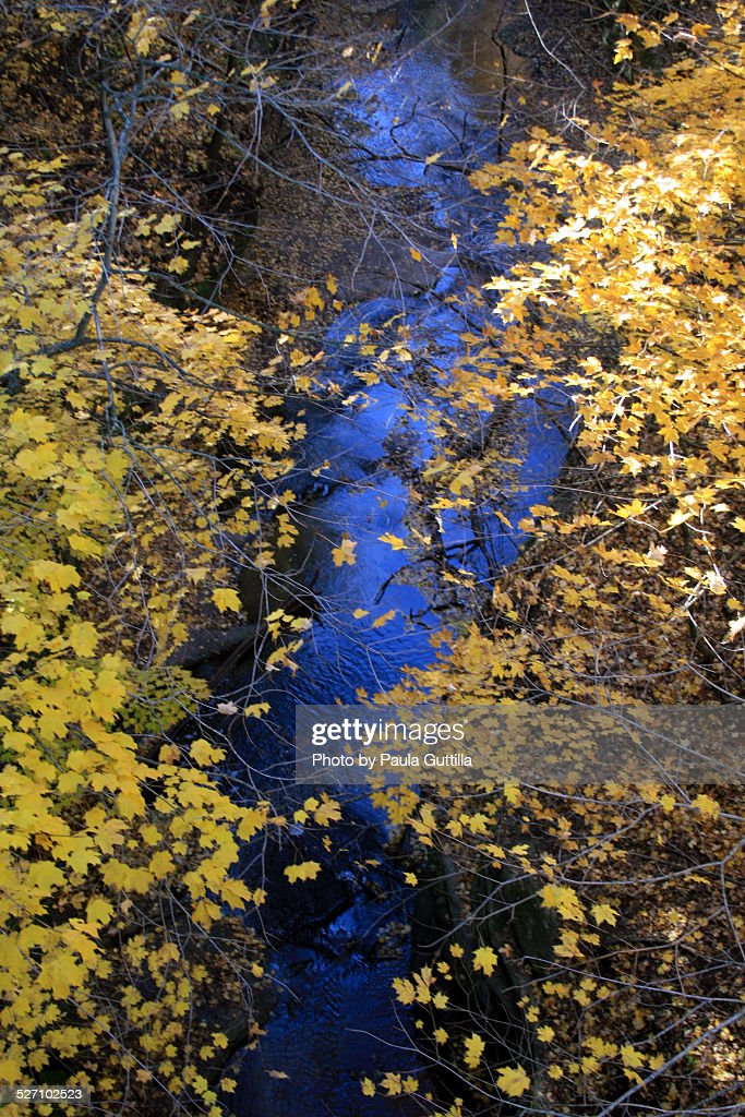 Autumn Colors : Stock Photo