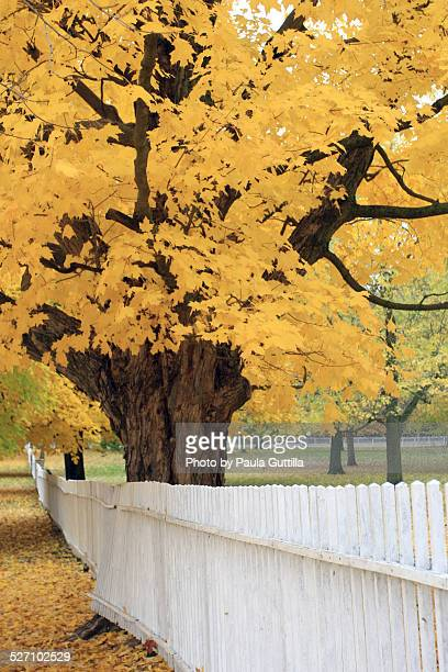 autumn colors - paula guttilla stock pictures, royalty-free photos & images