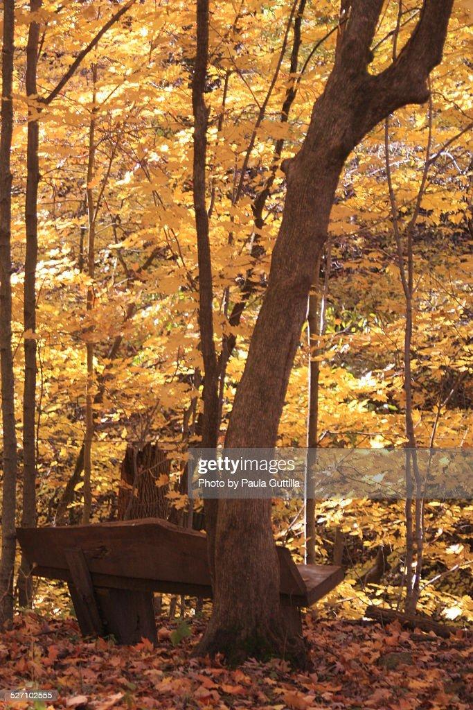 Autumn Colors : Stock-Foto