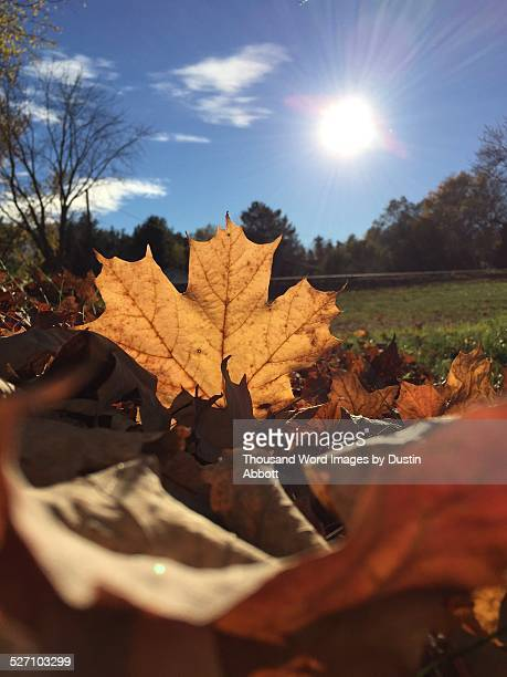 autumn colors - dustin abbott stock pictures, royalty-free photos & images