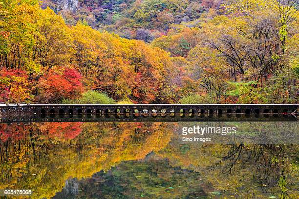 autumn colors - dandong stock pictures, royalty-free photos & images