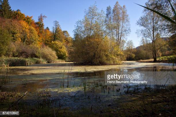 autumn colors - heinz baumann photography stock-fotos und bilder