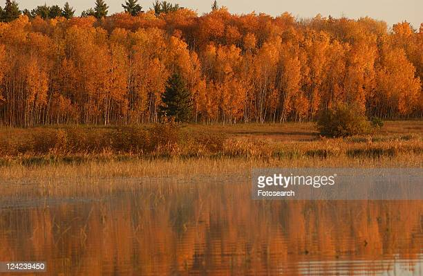autumn colors reflected in lake - kenora stock pictures, royalty-free photos & images