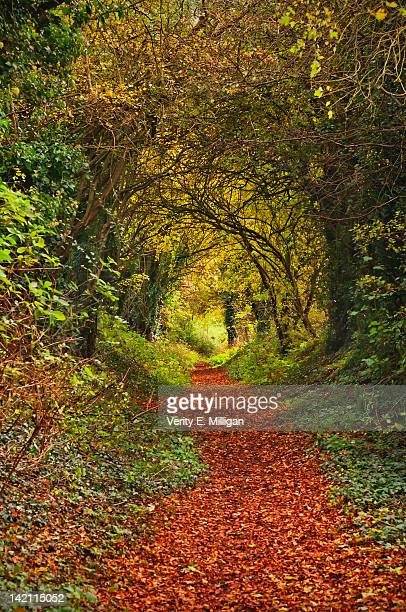 autumn colors swirl into forest - northamptonshire stock pictures, royalty-free photos & images