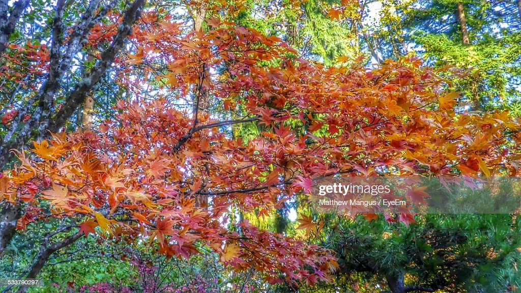 Autumn Colors Vibrant Red On Trees : Foto stock