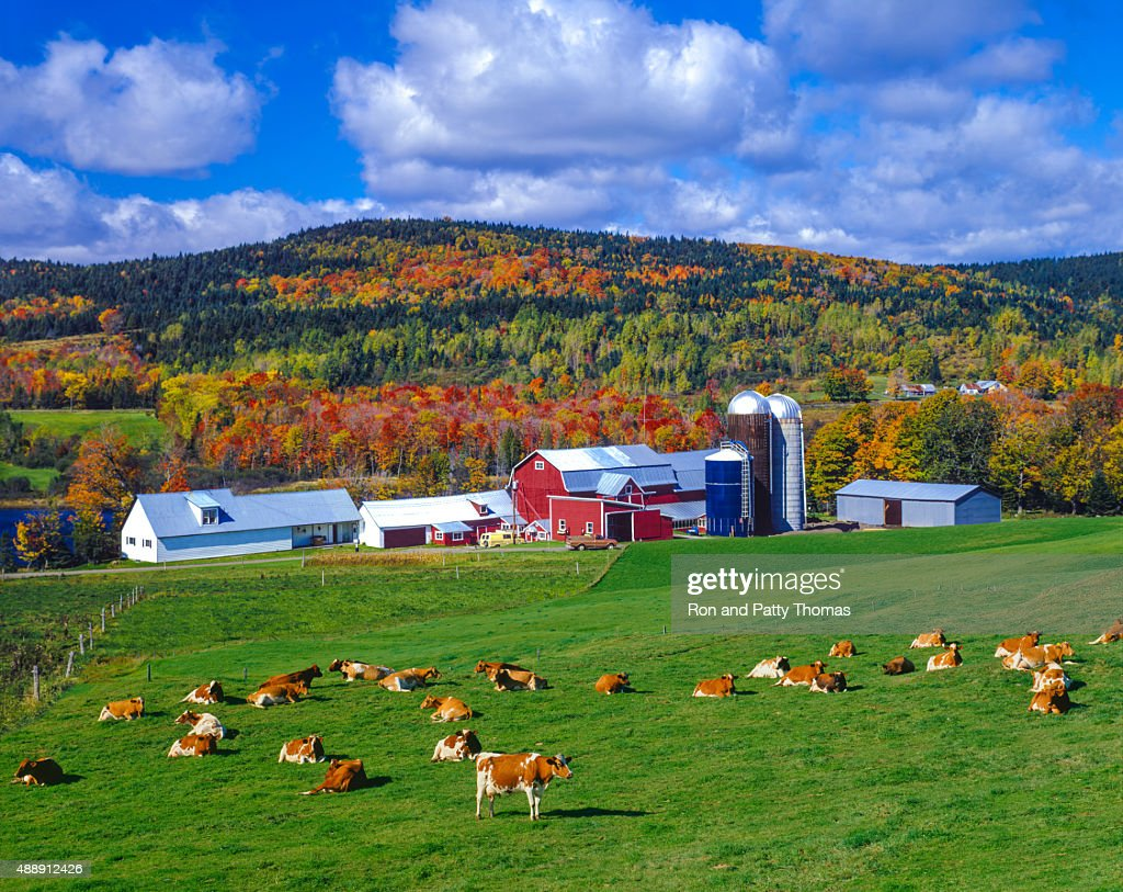 Autumn colors with farm in the Green Mountains, VT : Stock Photo