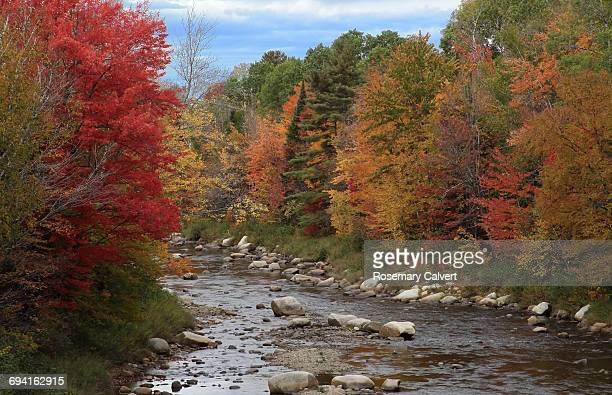 autumn colour beside the swift river, nh. - swift river stock photos and pictures