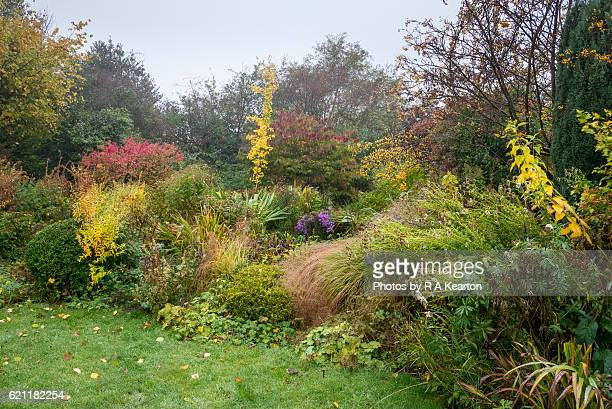 Autumn colour in an English cottage garden