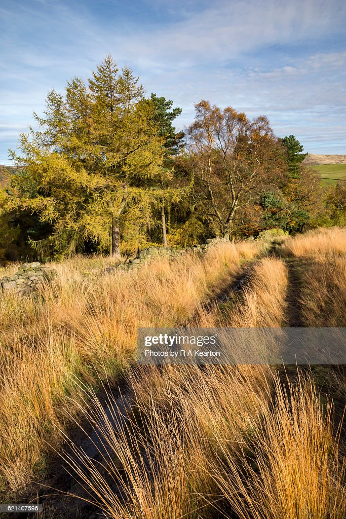 Autumn Colour On Countryside Walk Stock Photo | Getty Images