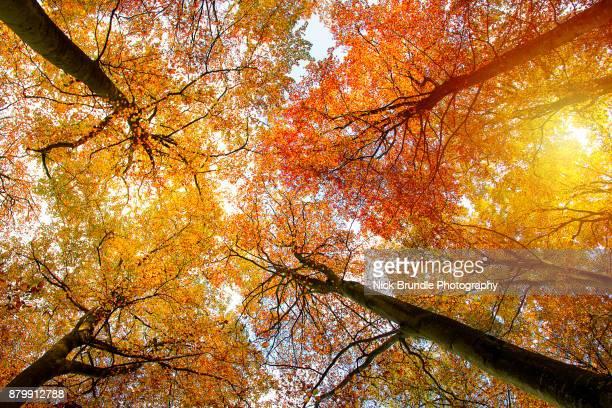 autumn colour - novembro azul - fotografias e filmes do acervo
