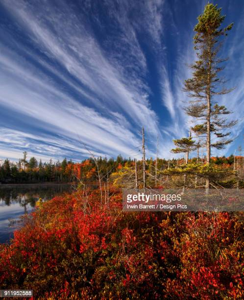 autumn coloured foliage at jacks lake - bedford nova scotia stock pictures, royalty-free photos & images