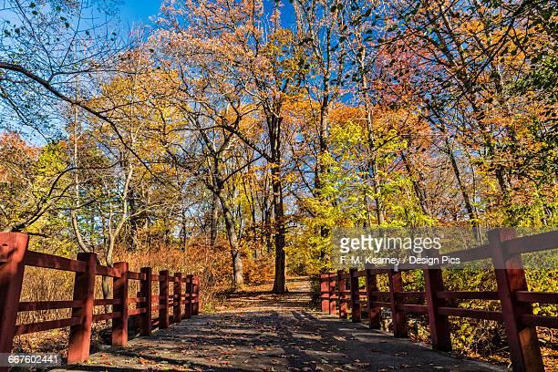 Autumn coloured foliage in Clove Lakes Park