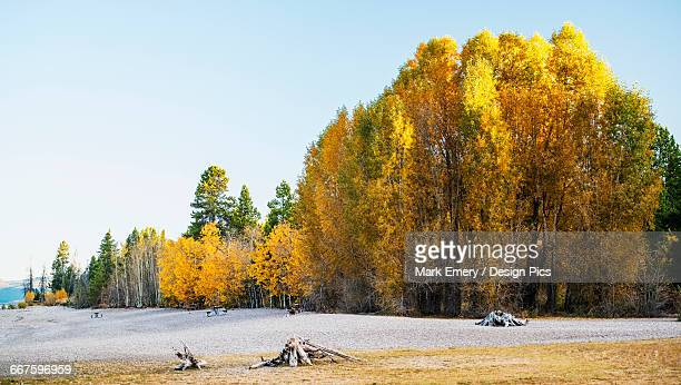 autumn coloured trees against a blue sky - emery stock photos and pictures