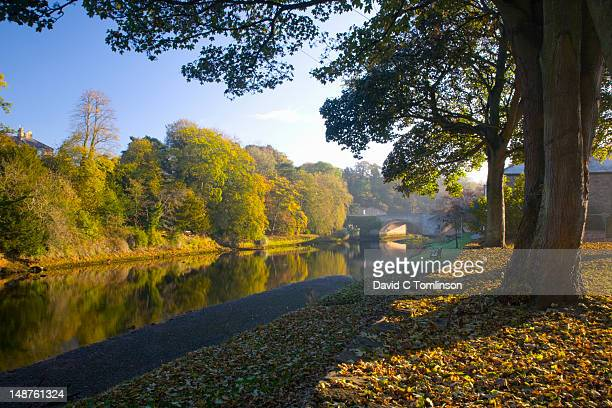 autumn colours along river coquet shore. - northumberland stock pictures, royalty-free photos & images