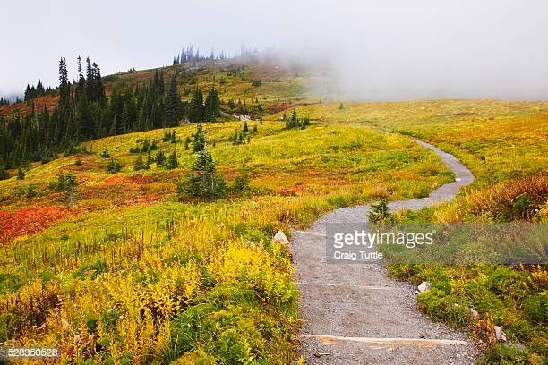 Autumn colours and fog with a winding path on mount rainier in mount rainier national park; washington state united states of america