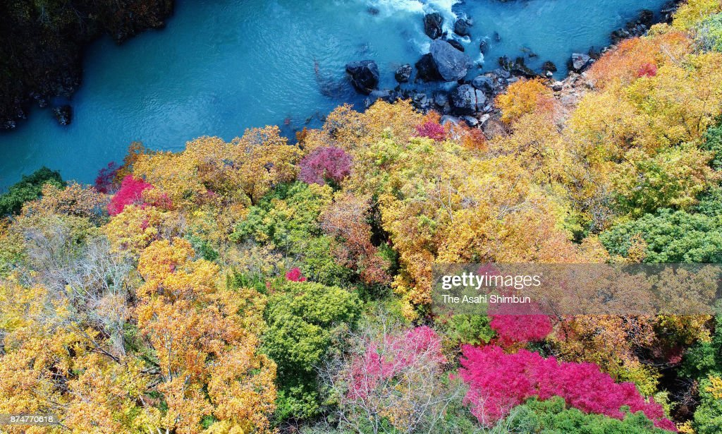 Autumn colours are seen at Tamagawa River on November 15, 2017 in Okutama, Tokyo, Japan. The peak of the vibrant colors was a little late this year due to rainfall and typhoons, according to the town's tourist section. The full glory of autumn will continue there until the end of this week.