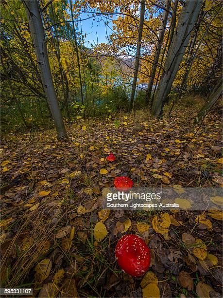 Autumn colours at Twizel